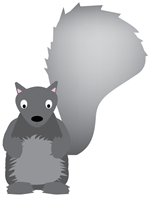 grey-squirrel-lg
